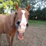 Horse with mouth open